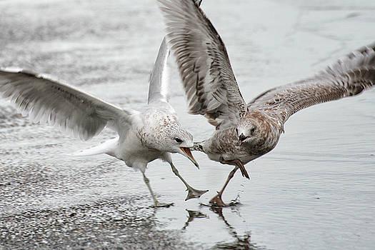 Gull Dispute by William Selander