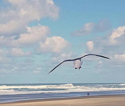 Gull Getaway by Suzy Piatt