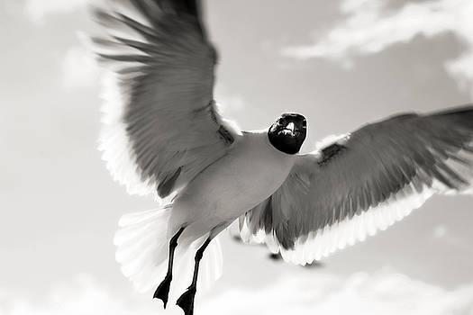 Marilyn Hunt - Gull in Flight 2
