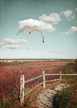 Gull Over Provincelands Trail, Cape Cod by Brooke T Ryan