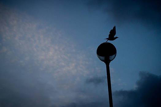 Gull taking off by Alex Leonard