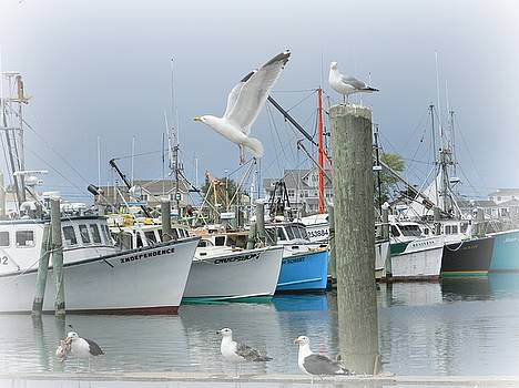 Gulls and Boats by Diane Valliere
