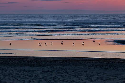 Gulls at Sunset by Jane Eleanor Nicholas