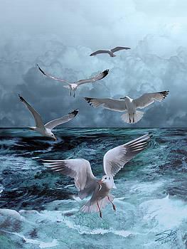 Gulls' Banquet by M Spadecaller