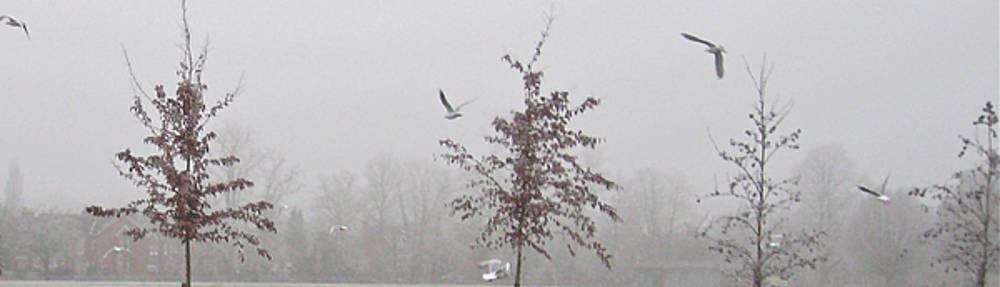 Gull's Flight by Joshua Ackerman