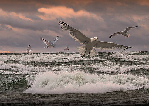 Randall Nyhof - Gulls Flying at Sunset