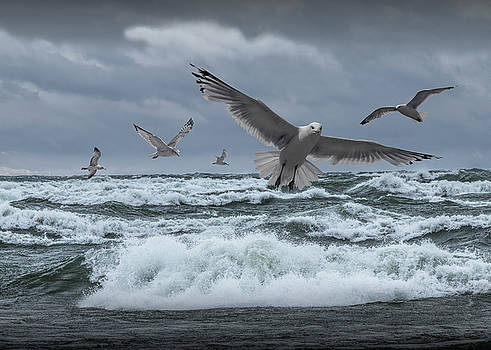 Randall Nyhof - Gulls Flying over the surf on Lake Michigan