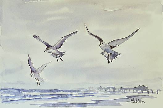 Gulls in the fog by Julianne Felton