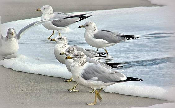 Gulls in the Surf by Rosanne Jordan