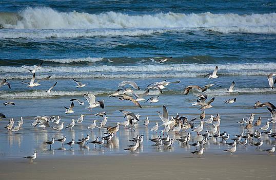 Patricia Twardzik - Gulls of a Feather Flock Together