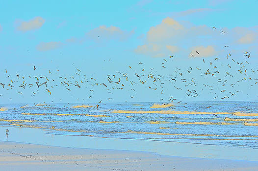 Patricia Twardzik - Gulls on the Beach Shoreline