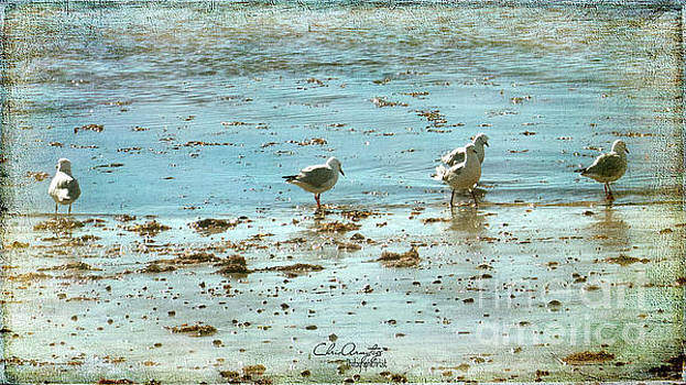 Gulls on the Edge by Chris Armytage