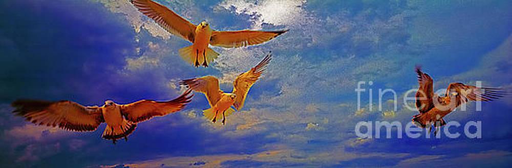 gulls stop action daytona beach Fl by Tom Jelen