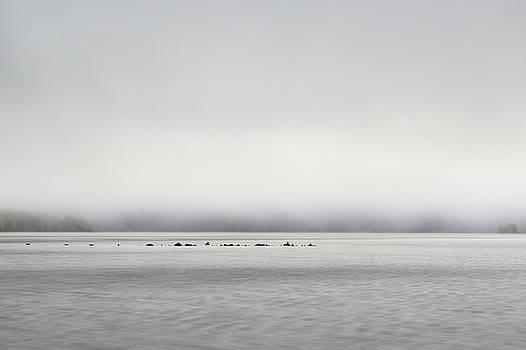 Guls standing still on rocks by Jouko Lehto