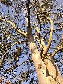 Gum Tree 1 by Julia Woodman
