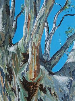 Gum tree by Nicci Bedson