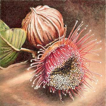 Gumnut and Flower by Robynne Hardison
