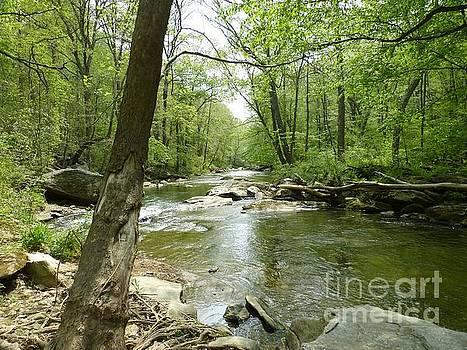 Gunpowder Falls - NCR Trail by Donald C Morgan
