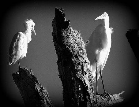 GW Heron and Snowy Egret Stare-Down by Jon Johnson