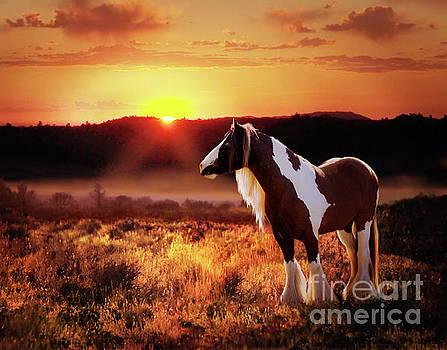 Gypsy Sunset by Melinda Hughes-Berland