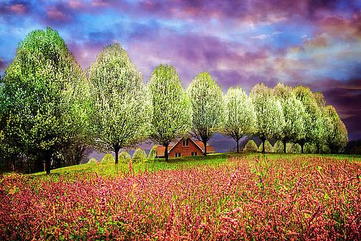 Gypsy Wind in Pink by Debra and Dave Vanderlaan