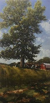 Hackberry Shade by Marty Coulter