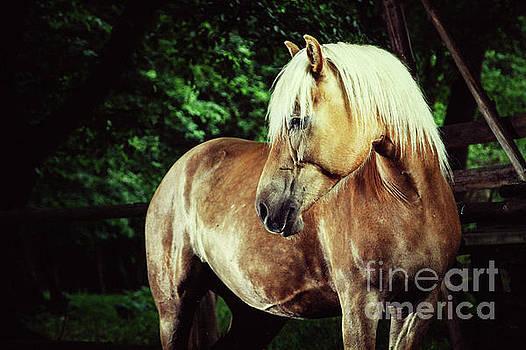 Dimitar Hristov - Haflinger Horse Equestrian Portrait