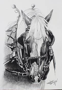 Haflinger Portrait by Carolyn Valcourt