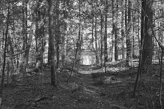 Haggetts Trail by Tricia Marchlik
