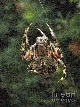 Hairy Orb Spider On Web Lines            September           Indiana by Rory Cubel