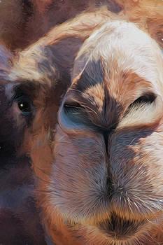 Hairy the Camel by David Kehrli