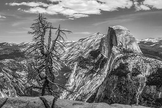Half Dome and Tree, BW by Tim Sullivan