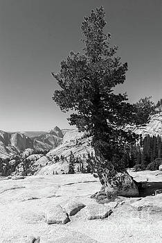 Wingsdomain Art and Photography - Half Dome and Yosemite Valley From Olmsted Point Tioga Pass Yosemite California dsc04270bw