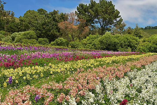 Half Moon Bay Flower Field by Dean Hueber