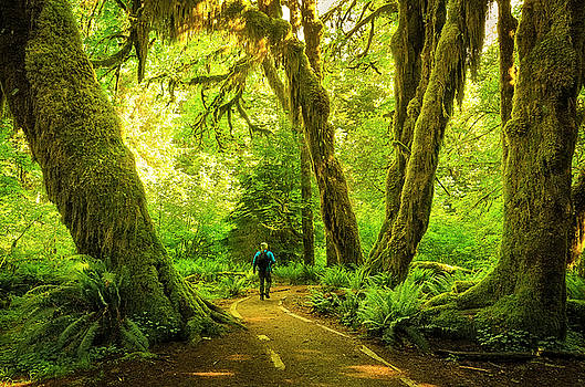 Hall of Mosses Trail at Olympic National Park by Matt Shiffler