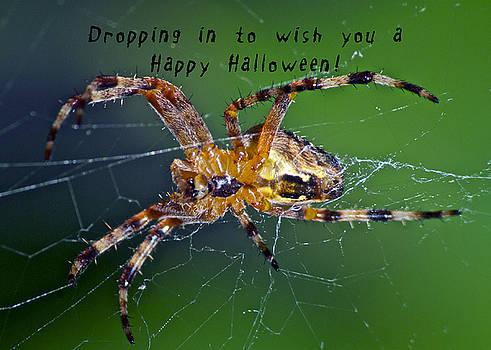 Michael Peychich - Halloween Spider