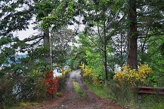 Hamma Hamma Driveway by Seil Frary