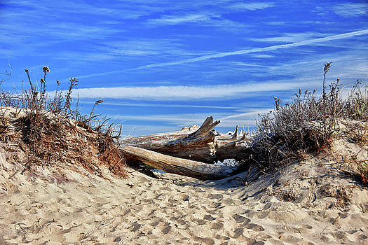 Hammonaset Driftwood by Tricia Marchlik