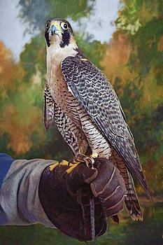 Nikolyn McDonald - Hand of the Falconer