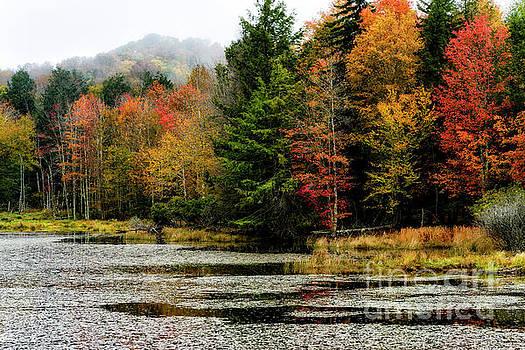 Handley Wildlife Managment Area Autumn by Thomas R Fletcher