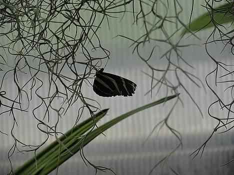 Black Zebra Striped Butterfly Hanging On by Mozelle Beigel Martin