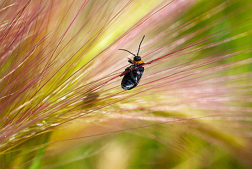 Hanging by a Weed by Richard Espenant