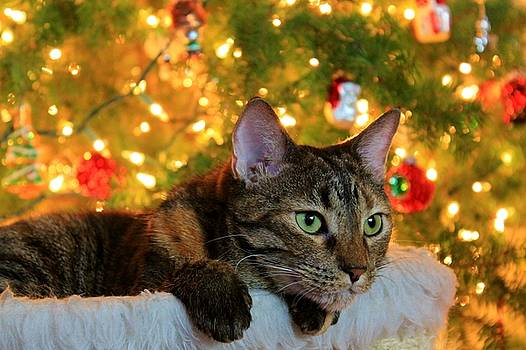 Hanging by the Tree by Catie Canetti