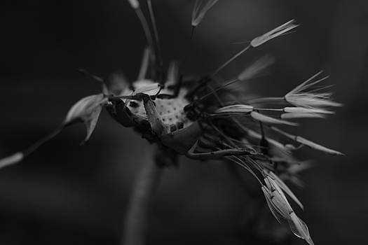 Hanging On by Jessica Myscofski