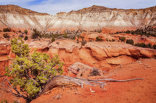 Hanging on the Cliff at Kodachrome Basin State Park by Daniela Constantinescu