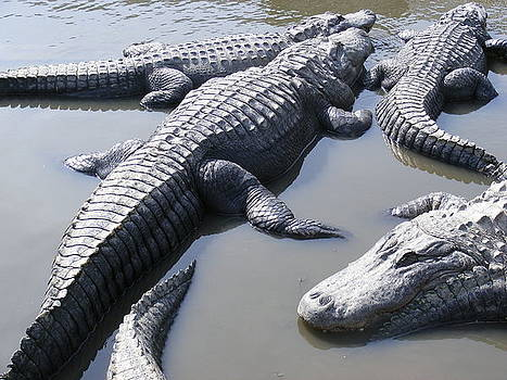 Hanging out - Alligators North Myrtle Beach by Elena Tudor