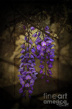 Hanging Out With Wysteria by Rene Crystal