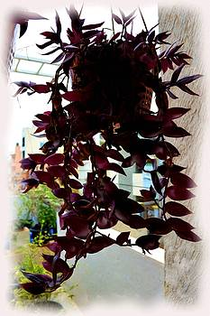 Hanging Pot Silhouette by Usha Shantharam