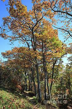 Hannah Run Trail at Skyline Drive in Shenandoah National Park by Louise Heusinkveld