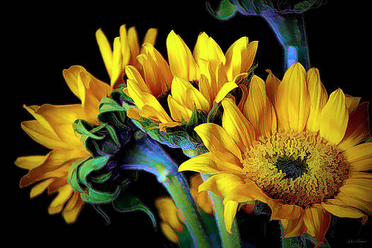 Happiness is Sun Flowers by John Rivera